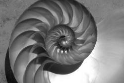 fibonacci spiral